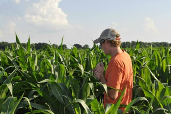 man-in-cornfield